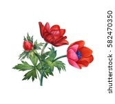 Stock photo watercolor hand painted red flowers can be used as romantic background for web pages wedding 582470350