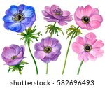 Watercolor Set Of Anemone...