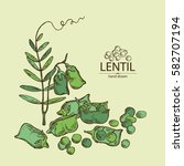 background with lentil. hand... | Shutterstock .eps vector #582707194