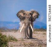 old elephant  amboseli national ... | Shutterstock . vector #582716668