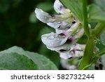rain drops on flower blossoms... | Shutterstock . vector #582732244