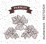 parsley. herb and spice label.... | Shutterstock .eps vector #582732424