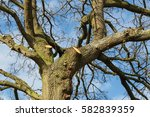 Large Overhanging Branches Hav...