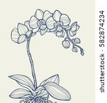 exotic orchid flower isolated ... | Shutterstock .eps vector #582874234