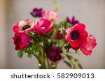 bouquet of red anemone close up | Shutterstock . vector #582909013