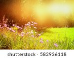 abstract dreamy photo of spring ... | Shutterstock . vector #582936118