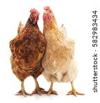 two brown chickens isolated on... | Shutterstock . vector #582983434