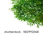 green leaves isolated on white... | Shutterstock . vector #582992068