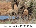 baby elephant nuzzles up to its ... | Shutterstock . vector #582999994