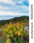 Small photo of Mountain and sea landscape with mountain plants euphorbia in cloudy day on Aegina island, Greece