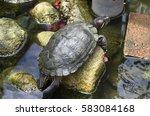 Tortoise Climbing On The Rock...
