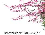 plum blossom isolated on white... | Shutterstock . vector #583086154