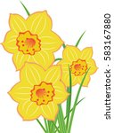 bouquet of narcissuses isolated ... | Shutterstock .eps vector #583167880