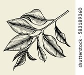 hand drawn branches and leaves... | Shutterstock .eps vector #583189360
