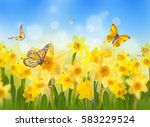 Yellow Daffodils With...