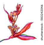 red passion tropical flower in... | Shutterstock . vector #583242046