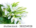 Bouquet Of Snowdrops Isolated...