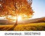 shiny beech tree on a hill... | Shutterstock . vector #583278943
