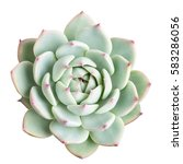 Succulent Plant Isolated On...