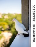 A White Dove Sitting On A...