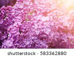 macro image of spring soft... | Shutterstock . vector #583362880