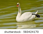 Amazing White Goose Floating I...