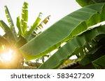 banana leaves | Shutterstock . vector #583427209