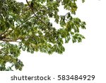 green leaves isolated on white... | Shutterstock . vector #583484929
