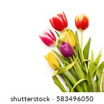 spring tulips with green ribbon ... | Shutterstock . vector #583496050