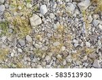 green vegetation pushing its... | Shutterstock . vector #583513930