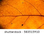 orange leaf texture for... | Shutterstock . vector #583515910