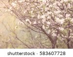 Blooming Spring Tree On A...