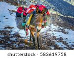 a donkey   mule carrying the... | Shutterstock . vector #583619758