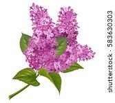 spring flowers. gentle fragrant ... | Shutterstock .eps vector #583630303