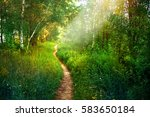 path footpath in the deciduous... | Shutterstock . vector #583650184