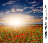 poppy and flowers on the field. ... | Shutterstock . vector #583678294