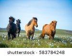 Icelandic Horses. The Icelandi...