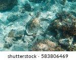 turtle underwater  gili meno ...   Shutterstock . vector #583806469