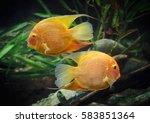 Pez   Fish 2
