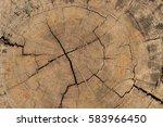 Natural  Wood Texture Of Cut...