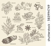 collection of herbs and spice.... | Shutterstock .eps vector #583994749