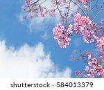 Pink Sakura Cherry Flower...