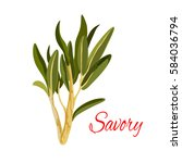savory icon. herbal spice ... | Shutterstock .eps vector #584036794