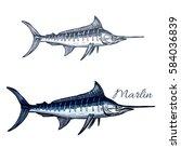 Marlin Sketch Vector Fish....