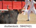 Furious Bull In The Bullfight...