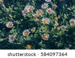 vintage style of daisy flowers... | Shutterstock . vector #584097364