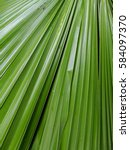 texture and lines of green palm ... | Shutterstock . vector #584097370