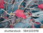 maple leaves and  branches... | Shutterstock . vector #584103598