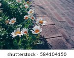 vintage style of daisy flowers... | Shutterstock . vector #584104150