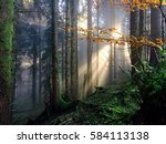 swiss forest with sunrays | Shutterstock . vector #584113138